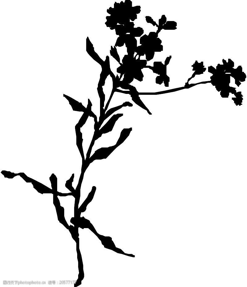 grasses花草1185
