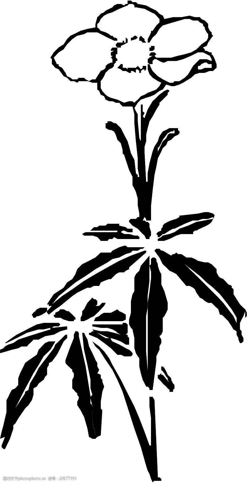 grasses花草1186