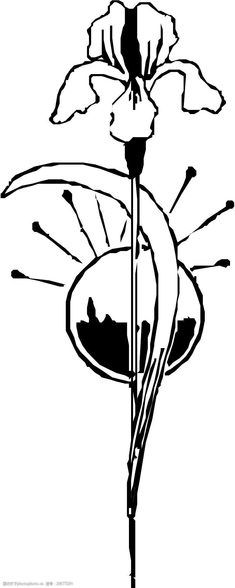 grasses花草1191